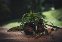 Anvisa pode regulamentar na próxima semana o plantio de maconha para uso medicinal.