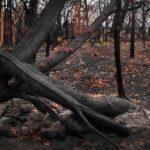 A força da natureza em registro feito pela fotógrafa australiana Mary Woorwinde. Foto - reprodução Facebook