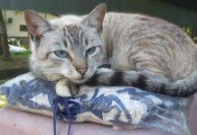 Prefeitura do Rio lança projeto para estimular adoção de animais de abrigos públicos. Foto - Facebook - Subsecretaria do Bem Estar Animal
